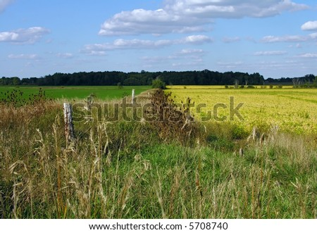 Countryside.Blue sky, yellow canola, brown grass and green winter-crop