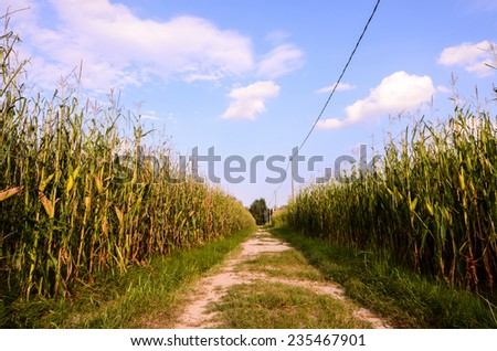 Countryside Gravel Road Going Through the Fields in North Italy - stock photo