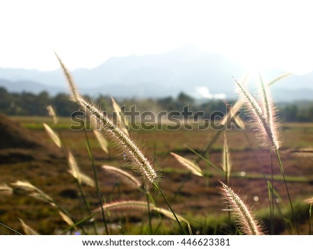 Countryside in Thailand with rice fields in background, Asia