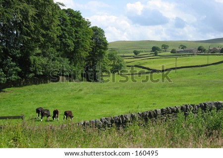 Countryside in Yorkshire Dales, UK.