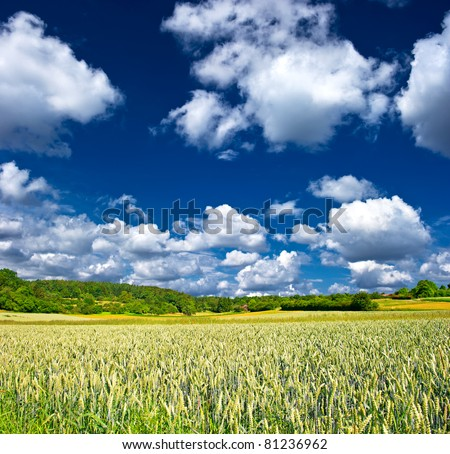 countryside. landscape with wheat field and cloudy sky