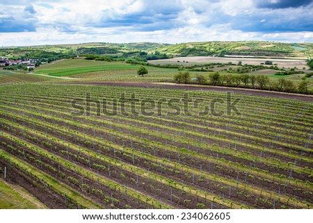 Countryside of southern Moravia, with vineyards, Czech Republic