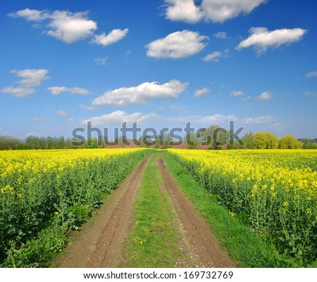 Countryside road and golden field of rapeseeds
