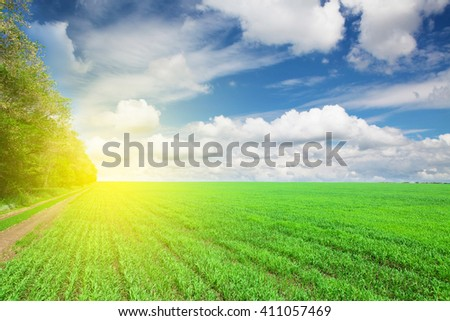 Countryside road between green grass field and forest - stock photo
