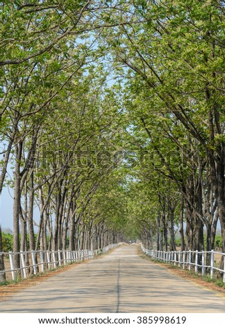 Countryside road tunnel of green trees