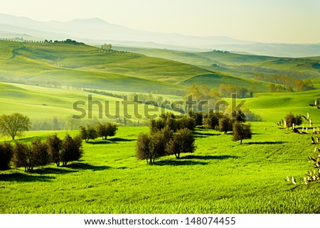 Countryside, San Quirico���´Orcia , Tuscany, Italy