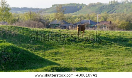 Countryside sunrise view with a cow pasture, Russia. Cow pasture at sunrise. Green grassy field with a cow. Green grass field sunrise. Countryside field sunrise. Countryside grass field with brown cow - stock photo