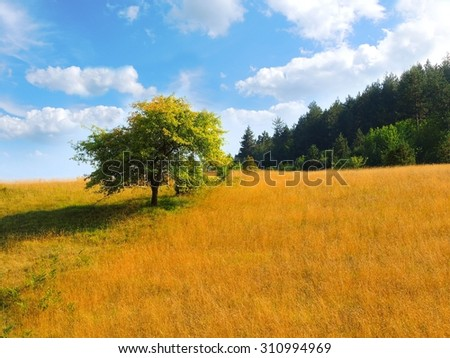 Countryside / Tree on hill /  Landscape / Zlatibor,Serbia