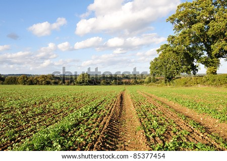 Countryside View of Crops Growing on Ploughed Farmland - stock photo