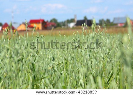 Countryside view of the oats field and the village away. Shallow DOF - stock photo