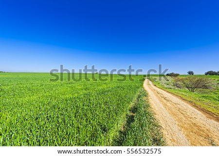 Countryside with green field and rural curving road in Israel. Early spring in fields in southern Israel.