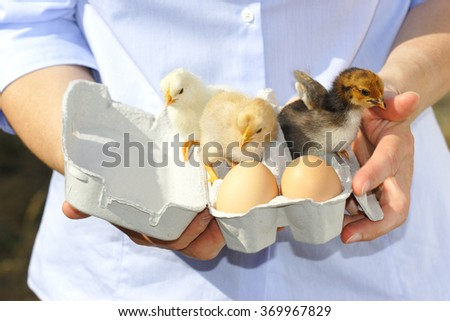 countrywoman is presenting a paperbox with eggs and chicken - stock photo