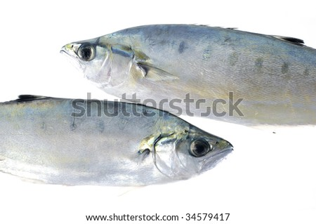Couple a raw fish