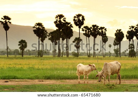 Couple Cows In The Green Field - stock photo