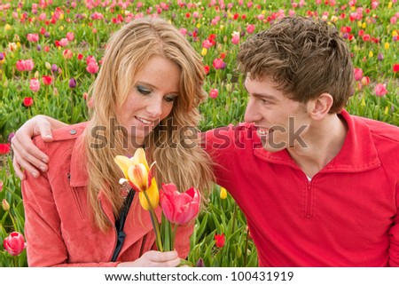 Couple Dutch tourists are plucking tulips in the flower fields - stock photo