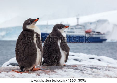 Couple Gentoo Penguins at the background of ship, Antarctica - stock photo