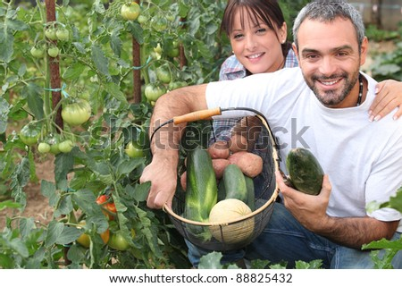 Couple growing vegetables - stock photo
