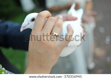 couple holding a dove, pigeon in his hands, wedding ceremony - stock photo
