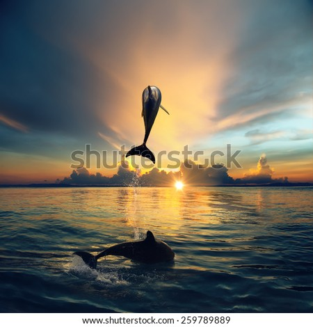 Couple jumping dolphins, morning sea and sunrise sky, creamy clouds, bright sun, shining water. Ocean life. - stock photo