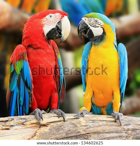 Couple macaw birds sitting on log - stock photo