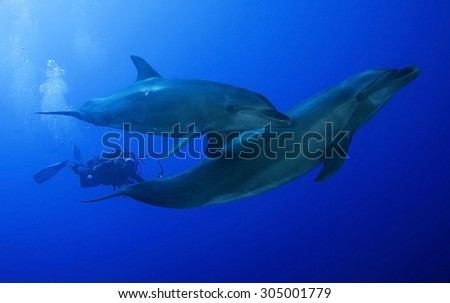 COUPLE OF BOTTLE NOSE DOLPHIN WITH UNDERWATER PHOTOGRAPHER