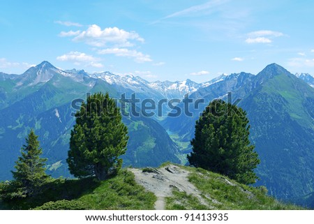 Couple of bush tree on the mountain with Alps landscape in the background - stock photo