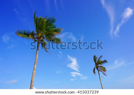 Couple of coconut tree against blue sky with copy space area. Composition of nature. - stock photo