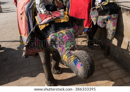 Couple of Decorated Elephants - stock photo