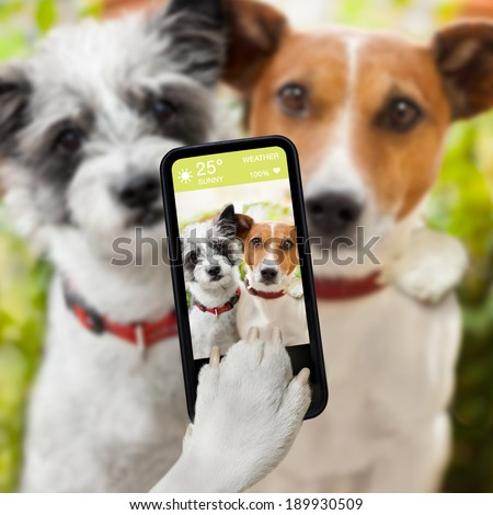 couple of dog taking a selfie together with a smartphone - stock photo