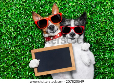couple of dogs in love very close together lying on grass holding a blank and empty blackboard as a banner - stock photo