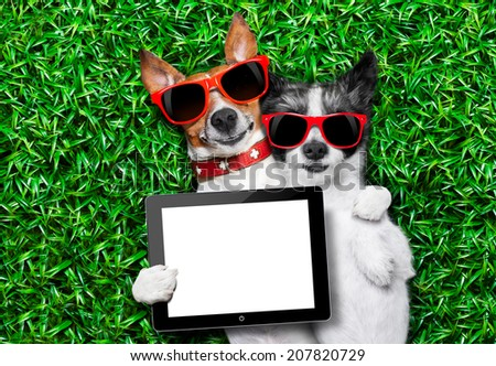 couple of dogs in love very close together lying on grass holding a blank and empty tablet pc or touchpad as a banner - stock photo