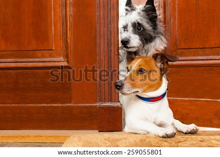 couple of dogs watching and looking , at the door at home , on the doormat - stock photo
