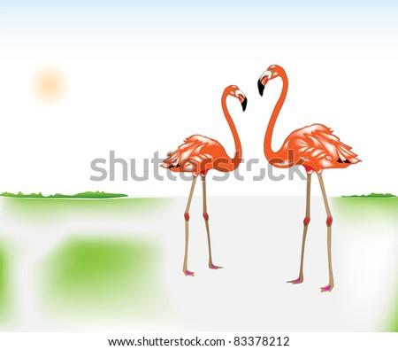 Couple of flamingos - stock photo