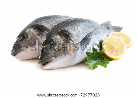couple of fresh gilt-head isolated on white - stock photo