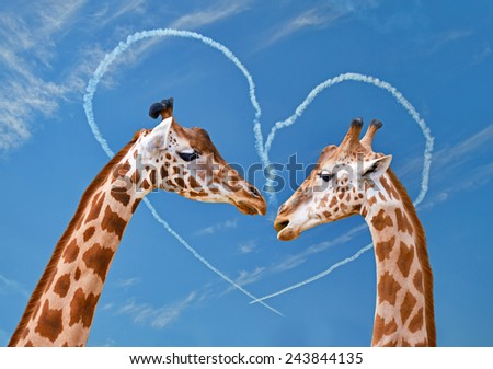 Couple of giraffes on backgrounds of sky with heart from clouds. - stock photo