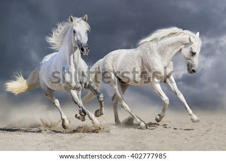 Couple of horse run against cloudy blue sky - stock photo