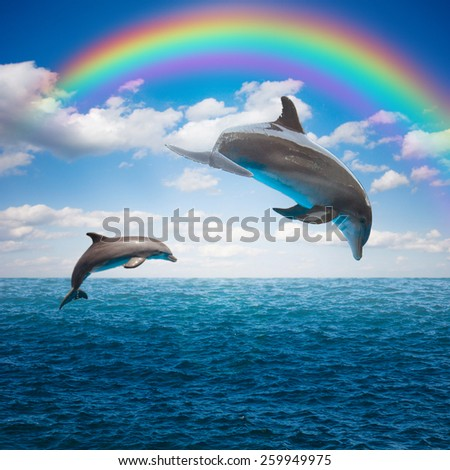 couple of jumping dolphins,beautiful seascape with rainbow in deep  ocean  waters and cloudscape - stock photo