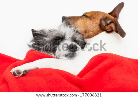 couple of loving dogs in bed close together - stock photo