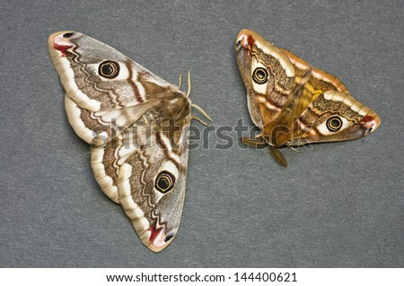 Couple of moths