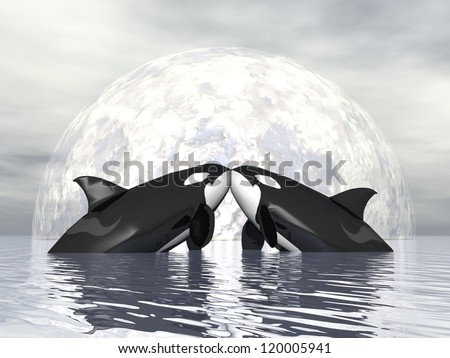 Couple of orca kissing in front of the moon - stock photo