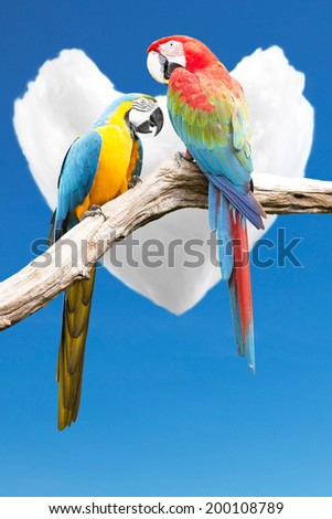 Couple of parrots macaws on background cloud cores in the heart. - stock photo