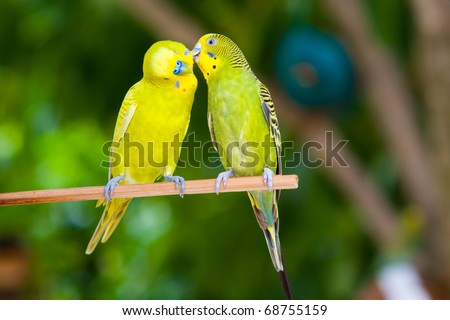 Couple of parrots on a branch on a tropical island - stock photo