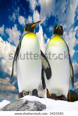 Couple of penguins - stock photo