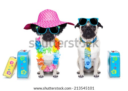 couple of pug dog ready to depart for summer vacation with sunglasses and luggage - stock photo
