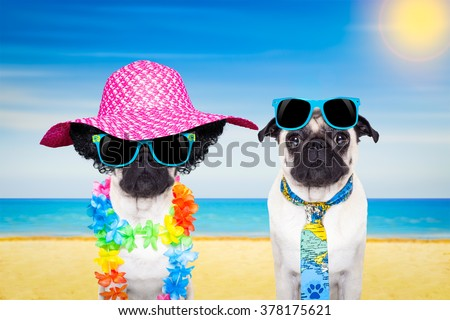 Couple Of Pug Dogs On Summer Vacation Holidays At The Beach With Sunglasses And Funny