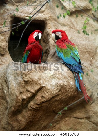 Couple of Red-and-green Macaws (Ara chloropterus) - stock photo