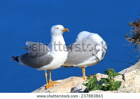 Couple of seagulls in a cliff - stock photo