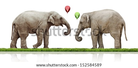 couple of the elephants calf over white background. concept - stock photo