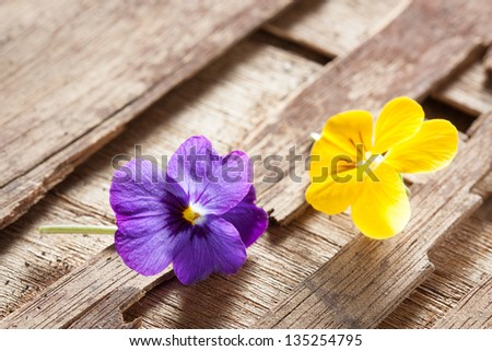 Couple of violet eatable flowers on purple and yellow on a wooden table close-up