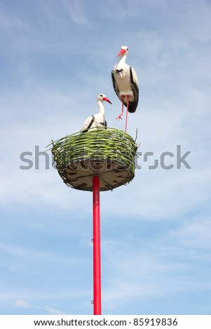 couple of white storks in nest - stock photo